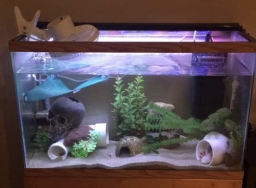 Cheap Aquarium Chiller Alternatives Diy Build